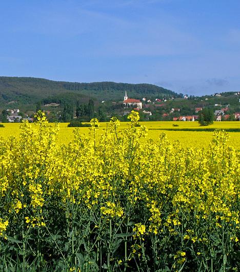 Szentbékkálla A hangulatos Veszprém megyei falu kitűnő célpont, ha kirándulóhelyet keresel. A falu is gyönyörű, de a közvetlen szomszédságában található velétei gótikus palotarom és a töttöskáli templomrom is érdekes látványosság.A képek az Országalbum.hu weboldalról származnak, akiknek ezúton is köszönjük a segítséget.
