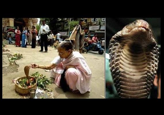Egy indiai hölgy, Bimbala Das egy kígyóhoz ment feleségül Atala faluban.
