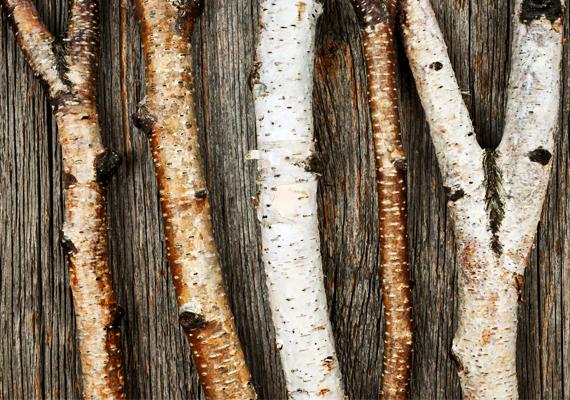 Az állatok után irány a növényvilág. A parfümgyártásban a különféle növények olajait is kedvelt illatalapanyagként tartják számon. Így például az úgynevezett fás illatcsoport egyik legkedveltebbje az érzéki, aromás szantálfa, aminek az illata szinte megbűvöli a férfiakat.