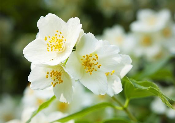 A virágos parfümcsoport leginkább használatos illatanyagai a jázmin, a rózsa, a narancsvirág, a gyöngyvirág vagy az orgona, de számos más virág illóolajai is belekerülnek a parfümökbe. A virágos illatok nőiességet sugároznak, szinte megbabonázzák a férfiakat.