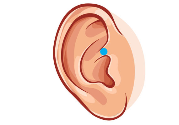 A következő pontot is érdemes megkeresni a fülön. A képen megjelölt rész 30-60 másodpercig tartó stimulálása ugyanis szintén fokozza a szexuális vágyat. Kísérletezzetek, és fantasztikus élményben lesz részetek!