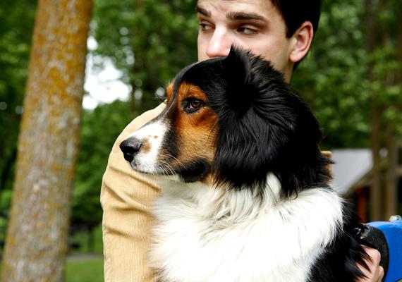 Az állattal mutatkozó férfi gondoskodó hajlamát és figyelmességét helyezi előtérbe, és feltehetően harmóniában van a természettel és az ösztöneivel.
