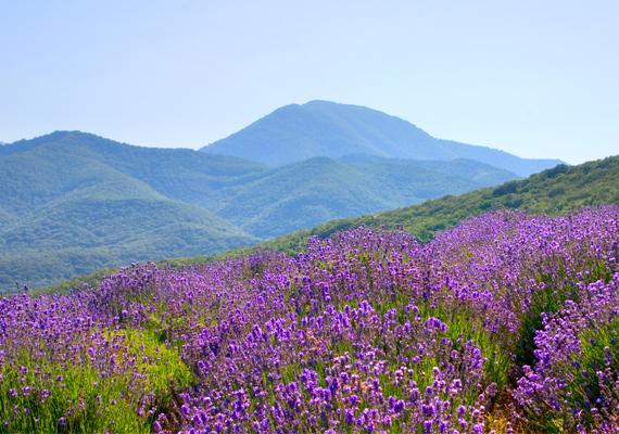 Szép külföldi vidékBejártátok Provence lankás vidékét, vagy elutaztatok a mesés Toszkánába nászútra? Ha úti célként hasonló külföldi, apró falvakkal, kisebb városokkal tarkított tájat választottatok, az arra utal, hogy szerelmetek különleges. Együtt a világ végére is elmennétek. Értékelitek az apró örömöket, a vidéki romantikát, vágyjátok a nyugalmat, ahol csakis egymásra koncentrálhattok - ezt tükrözi választásotok.