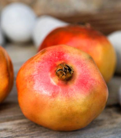 GránátalmaA gránátalma egy ősi szerelmi bájital legfőbb hozzávalója. Vágd fel a gyümölcs puha héját és pikáns húsát, turmixold össze darált mandulával, tökkel, szezámmaggal, mézzel és rizspálinkával. A sűrű masszát egy hétig tárolhatod, ami tökéletesen elég arra, hogy pároddal megtapasztaljátok tüzes hatását.Kapcsolódó galéria:Természetes vágykeltők »