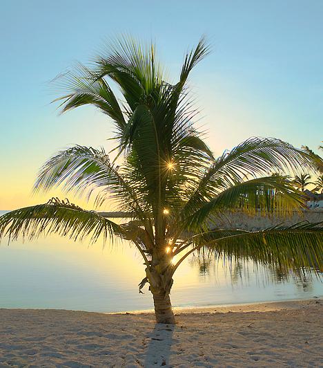 Hedonism - JamaicaA tengerparti swingerparadicsom csak bevállalósaknak ajánlott, hiszen a nudista medence környékén nem ritkák a forró jelenetek. Amennyiben nem rettensz el a párcsere gondolatától, egyben biztos lehetsz: itt az üdülés csak a szexről fog szólni.Kapcsolódó cikk:A világ 4 legerotikusabb strandja »