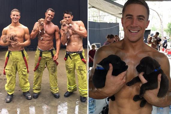 A tűzoltók másik nemes célja a kiskutyák elhelyezése, ugyanis minden kutya örökbe fogadható.