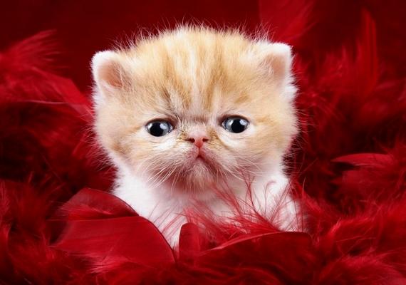 Örülnél, ha őt kapnád Valentin-napra?Kattints ide a nagyobb képért! »