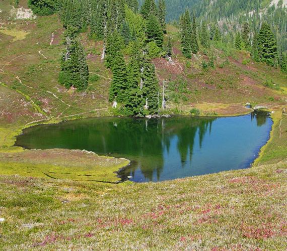 Az Egyesült Államok több szív alakú tóval is büszkélkedhet. A képen látható gyöngyszem a washingtoni Nemzeti Olimpiai Park területén található.