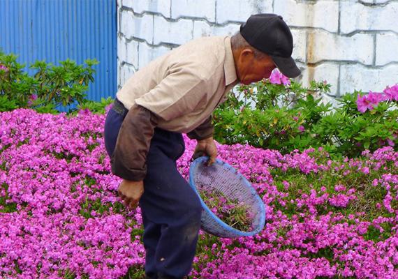 A férj, Kuroki úr úgy határozott, virágoskertet készít a feleségének, melyet ha nem is lát az asszony, az illatát mindig érezheti.