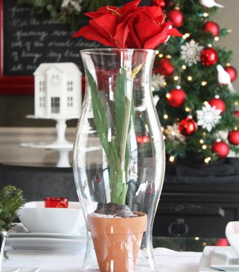 Mikulásvirág új köntösben                         A Mikulásvirág szokásos elrendezését dobd fel azzal, hogy üvegvázába állítod a cserepes növényt. Ez egészen letisztult stílust kölcsönöz mind a növénynek, mind az otthonodnak.