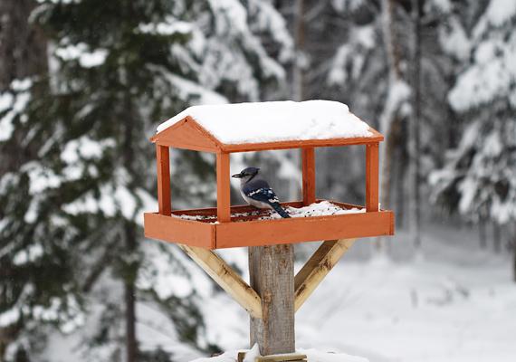Lásd el a madarakat télen is eleséggel, így két legyet üthetsz egy csapásra, hiszen dekorációnak is nagyon mutatós a madáretető.