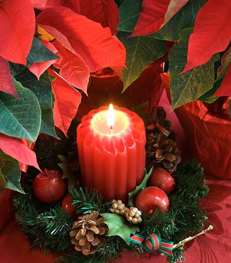 Mikulásgyertya  Egy vastag piros gyertya tökéletes dekorációja lehet a mikulávirágnak. Tedd kisebb műfenyőkoszorúra, díszítsd apró díszekkel, és helyezd a növények közé.