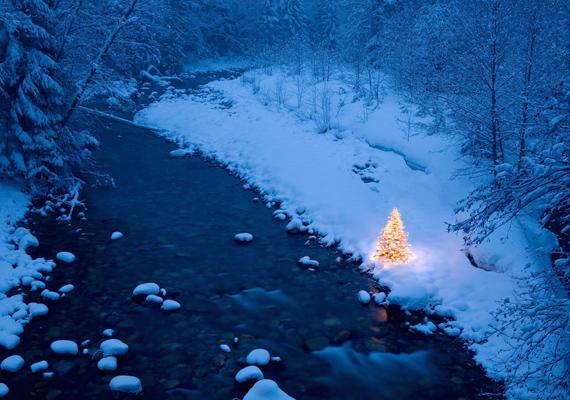 A magányos fenyő a patak partján várja, hogy az ajándékok alá kerüljenek. Kattints ide a nagy felbontású képért! »