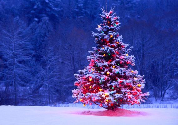 Szépen világítanak a színes égők a hófödte fán. Kattints ide a nagy felbontású képért! »
