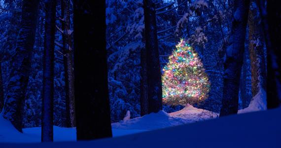 Ez a karácsonyfa úgy ragyog a sötétben, akárcsak Andersen meséjének főszereplője, a kis fenyő. A nagy felbontású képért kattints ide! »