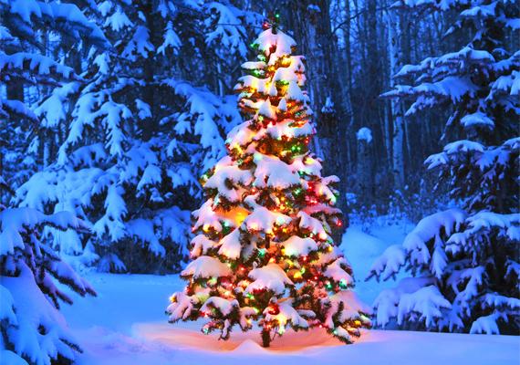 Mintha Andersen A kis fenyő meséjéből lépett volna elő ez a csodás karácsonyfa. A háttérkép letöltéséhez kattints ide!