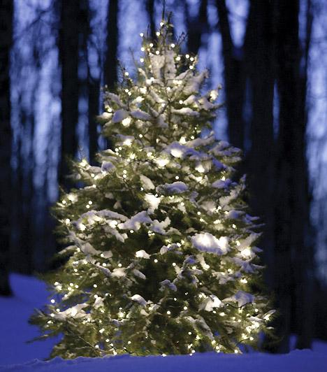 Karácsonyfa a kertben  A csillogó égők a kerti tuján is csodásak. Vásárolj kültéri égősort, tekerd vele körbe a fát, és már kész is a ragyogó kerti dekoráció.