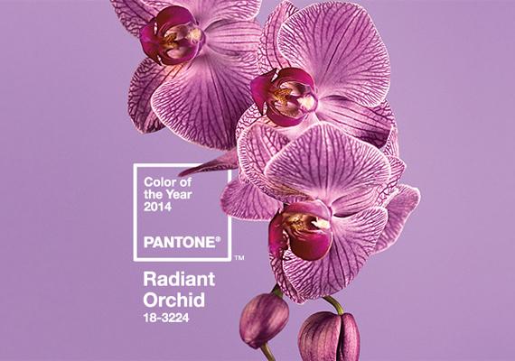 A Radiant Orchid névre keresztelt árnyalat.