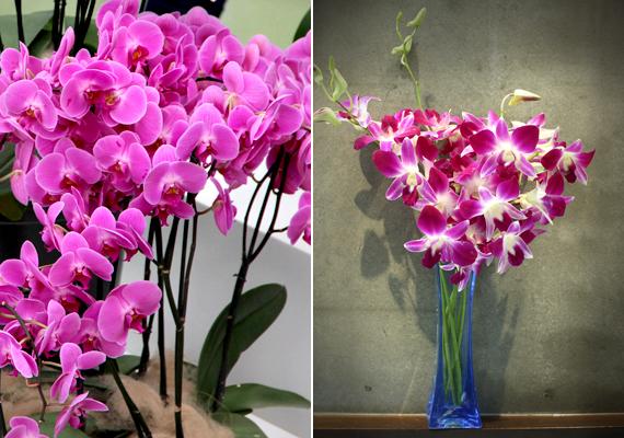 A vibráló színekben pompázó orchideák önmagukban is képesek feldobni a lakás egyes részeit.