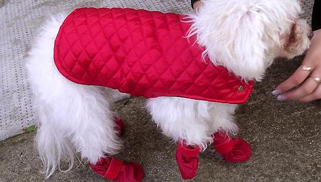 07fec19a4e A Candy Fashion kínálatában található darab garantáltan megóvja kedvencedet  a hidegtől, a steppelt, hőszigetelt kabátot ugyanis meleg polárbéléssel  látták ...
