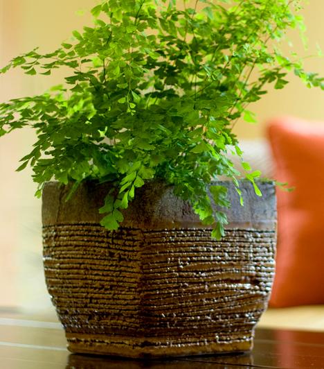Szobanövények                         A szobanövények is okozhatnak allergiát, többek között a fikusz, a yucca, a borostyán és a pálma, azonban a nedves virágföld a penészgombáknak is kedvező táptalajt nyújt. Érdemes rendszeresen fellazítani a felső földréteget, valamint cserélni a virágföldet.