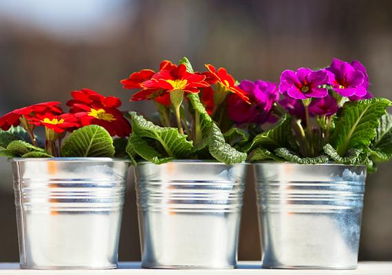 Ha a virágok cserepeiben pang a víz, könnyen megtelepedhetnek bennük a baktériumok, nem beszélve arról, hogy a nedves közegnek köszönhetően a penész is gyorsan felütheti a fejét.