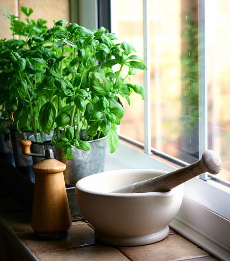 Fűszernövények talaja                         A friss fűszernövények nem csak finomak, de egészségesek is - a virágföldben azonban előszeretettel telepednek meg a különféle spórák, gombák, baktériumok és allergének, ráadásul a muslicák is lerakhatják itt a petéiket.                         Ügyelj rá, hogy ne öntözd túl a növényeket, a nedves talajt ugyanis különösen szeretik a gombák, és a biztonság kedvéért fedd be a virágföld tetejét erre a célra kapható kaviccsal, ami a vizet átengedi, de csökkenti a levegőbe kerülő allergének számát.