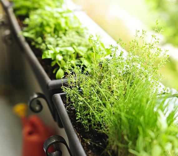 A kertészkedés legegyszerűbb módja a fűszernövények ültetése, ami nemcsak a szemnek, hanem a gyomornak is kedvez.