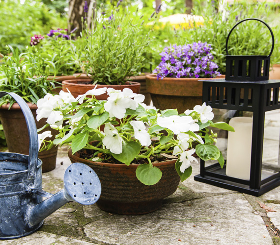 Néhány illatos, szemet gyönyörködtető cserepes növény, gyertya és persze egy kanna a víznek: ennyi kell a tökéletes balkonhoz.