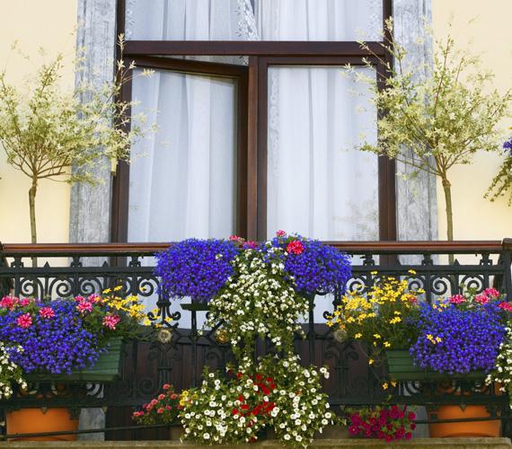 Ha a balkon szélesebb, akkor a két oldalán bőven elférnek dézsába ültetett fácskák, amelyekből válassz illatosat. Ezeket jól kiegészítik az egynyári apró virágok.