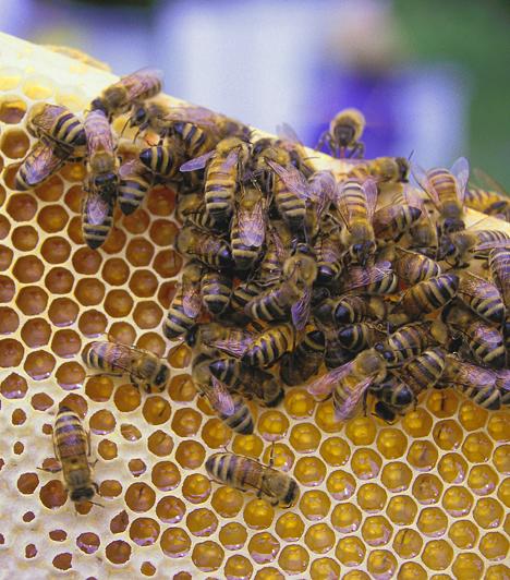 MéhviaszA természetes fából készült bútorok eredeti fényét méhviasz és szójaolaj keverékével adhatod vissza. A hozzávalókat egy tálban gőz fölött addig melegítsd, amíg a viasz teljesen felolvad. Habverővel alaposan keverd össze, majd töltsd jól zárható tartóba. A szerrel időnként vékonyan kend át a bútorokat.