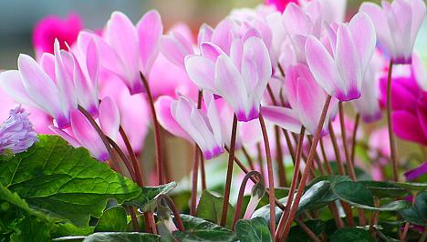 Hogyan lehet megszabadulni a virágok élősködőitől otthon - eroszakmentes.hu