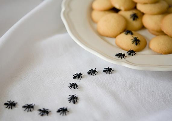 Ha megjelentek otthonodban a hangyák, keverj össze reszelt narancshéjat egy pohár meleg vízzel, majd öntsd oda, ahonnan a rovarok előjöttek.