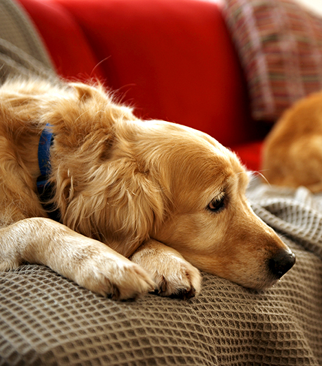 Állatok                         Ha állatokat tartasz a lakásban, fontos, hogy számolj az élősködők megjelenésével, és mindent tegyél meg a megelőzés érdekében. A legjellemzőbb a bolhák és rühatkák megjelenése lehet, de a kutya és a macska a kullancsokat is könnyen beviheti a lakásba.