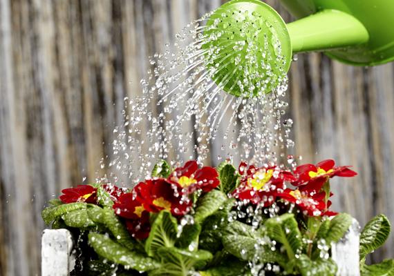 Növények locsolására is kiváló az ásványvíz, a szénsav és a benne található anyagok ugyanis jót tesznek a zöld apróságoknak.