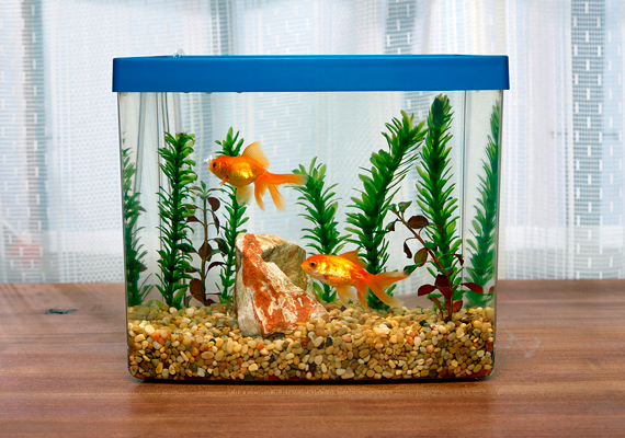 A víz és az arany szín is a gazdagságot szimbolizálja: ha egyébként is tervezted, hogy beszerzel egy akváriumot, érdemes ide helyezned, benne néhány kis aranyhallal.