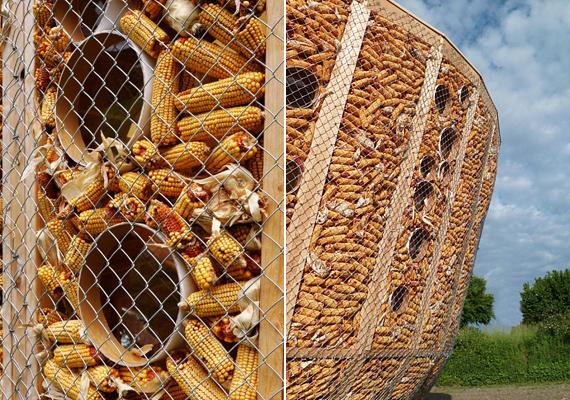 A kukoricacső a fenntarthatóságra törekvő alternatív építészet egyik közkedvelt alapanyaga, ugyanis jó szigetelőképességgel bír. A képen szereplő épület is ennek felhasználásával jött létre, a dróthálós és faszerkezetes megoldás stabilan tartja a természetes építőelemet. Ha többet szeretnél tudni a házról, kattints ide!