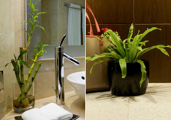 A zöld növények is tökéletes, hangsúlyos kiegészítői lehetnek a fürdőszobának.