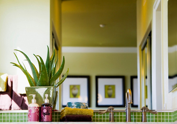 A zöld növények minden helyiséget feldobnak, a fürdőben pedig különösen jól mutatnak.
