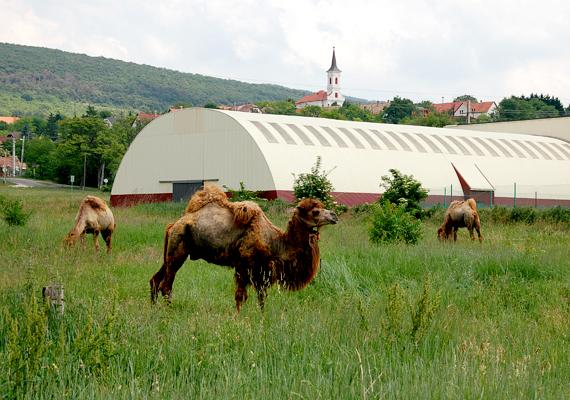 A felmérés alapján a Budapesthez közeli, festői fekvésű Telki lett az ország leggazdagabb települése.