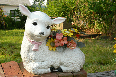 Kerti bárányka