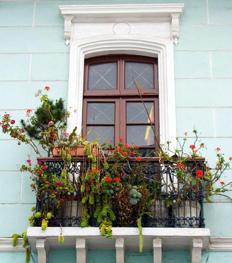 Ha tényleg kevés a hely...                         ... de nem szeretnél lemondani a virágokról, szerezz be olyan balkonládákat, amelyeket a korlát tetejére vagy kölső oldalára lehet rögzíteni, és abba ültesd a növényeket. Így nem csak helyet spórolsz, de a kíváncsi tekinteteknek is útját állod.                         Kapcsolódó cikk:                         3 pompás virágú, de igénytelen növény az erkélyre »