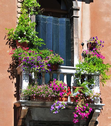 Virágból sohasem elég                         Sok olyan balkonnövény van, amely nem csak az időjárási viszintagságokat, de a feledékeny kertészt is jól viseli, ezért az erkélyt akkor is virágba boríthatod, ha egyébként nem sokat értesz a növényekhez. Válassz egy futónövényt is - nem csak különlegessé teszi a balkont, de árnyékot is ad.                         Kapcsolódó cikk:                         3 szélálló növény huzatos helyekre - Az erkélyen és a gangon is bírják »