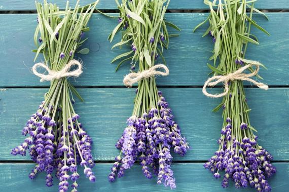 A levendula nyugodt, kellemes légkört teremt, illatosítja a lakást, nem utolsósorban pedig a hangyákat is távol tartja, akik nem túlzottan kedvelik illatát.