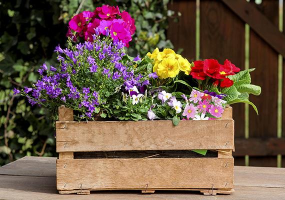 Nemcsak vágott, de élő növények esetén is hasznát veheted, ha például 1 liter vízben fél tablettát oldasz fel, majd ezzel locsolod zöld kedvenceidet. Ennél többet semmiképp ne adj a vízhez, ez azonban segít például abban, hogy nagyobb eséllyel elkerüld a növények gombás megbetegedéseit.