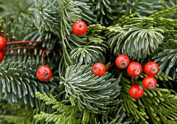 A legelemibb karácsonyi illatnak számít a fenyőé is: kötözz csokorba egy kevés fenyőágat - tehetsz bele bogyós ágakat is -, és helyezd vázába. Így akkor is kellemes illat veszi majd körül a vendégeket, ha nem abban a helyiségben tartózkodtok, ahol a karácsonyfa áll.
