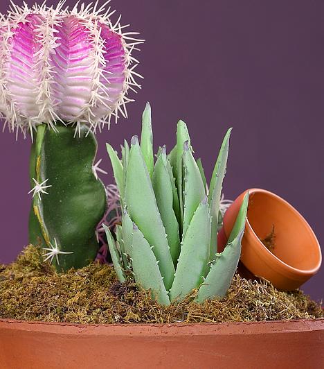 KaktuszLegyen akár kerek, akár tüskék nélküli, a feng shui szerint nem tanácsos kaktuszt otthon tartanod. Negatív energiát vonz a lakásba, melynek hatására zárkózottá, kötekedővé válhatsz, ráadásul a növény az új kapcsolatoknak sem kedvez.Kapcsolódó cikk:3 dolog, amivel tönkreteheted a kapcsolatod »
