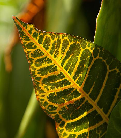 Hosszú, hegyes levelű növényekLehetőleg kisebb, kerekded formájú, kerek levelű növényeket tarts a lakásban. Ezek támogatják a pozitív energiát, míg a hegyes levelű növények zárkózottá, kötekedővé tesznek, legfőképpen akkor, ha az emberi kapcsolatok és a szerelem területén tartod őket.