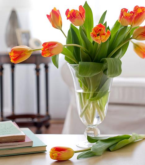 Vágott virágokHa kedveled a növényeket, akkor részesítsd előnyben a cserepes fajtákat. A vágott virágok nagyon szépek, de negatív energiát teremtenek a lakás  minden részében, hiszen rövid életükkel az elmúlást szimbolizálják.