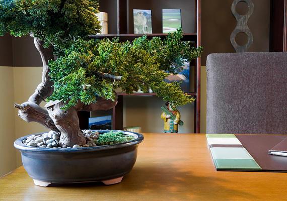 A bonszáj a lassú növekedést és a lassú gyarapodást szimbolizálja, ami gátolja a pénzügyi szempontból serkentő energia áramlását.